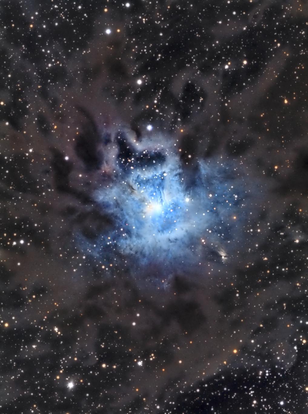 Nébuleuse de l'Iris - NGC 7023