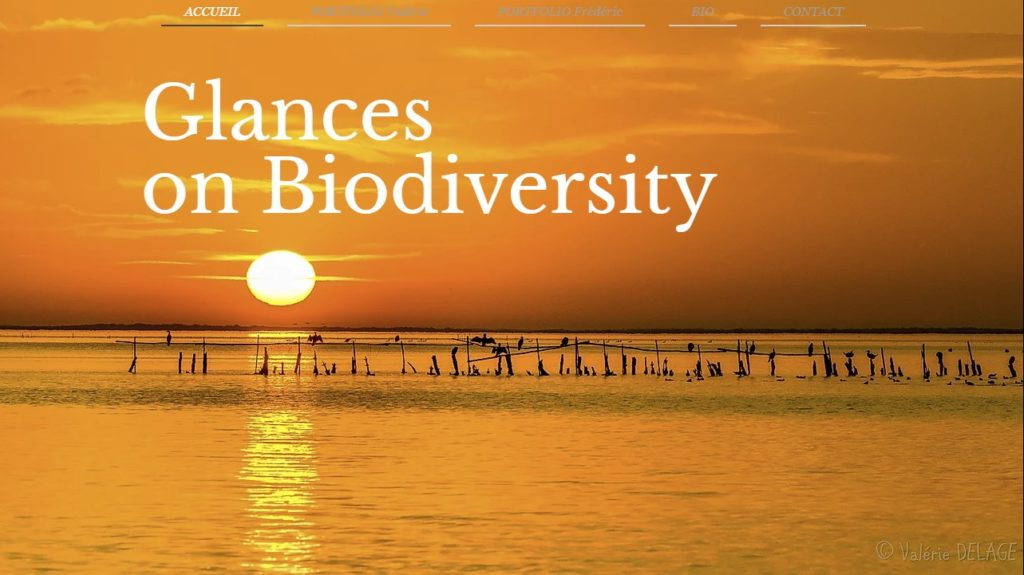 Glance Of Biodiersity